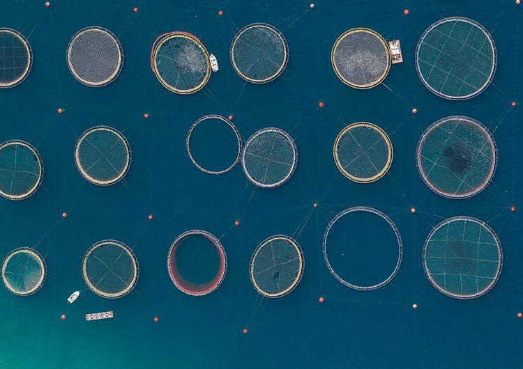 Surreal Aerial Views of Fish Farms