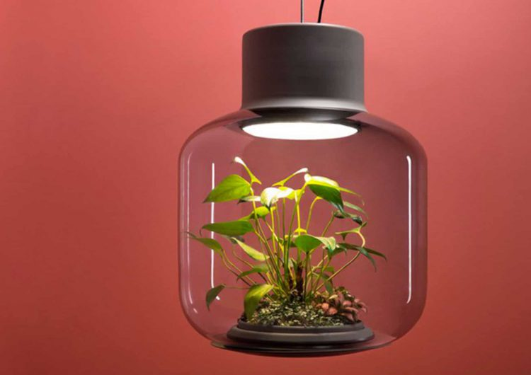 The Mygdal Plant Lamps is both a light and a plant