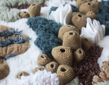 Vanessa Barragão's rugs depict diverse underwater ecosystems