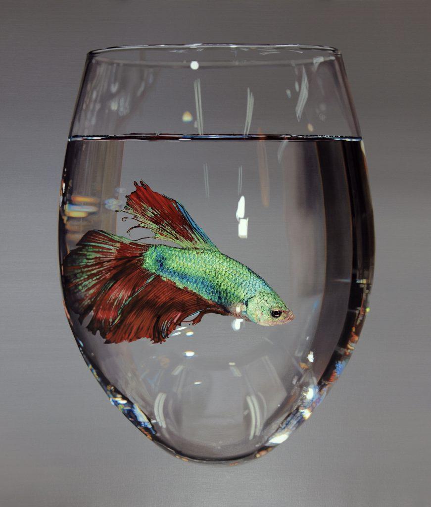 hyperrealistic artist animal painting