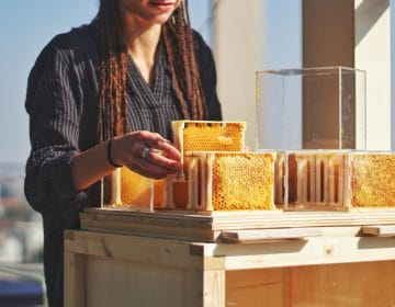 B-box: First Ever Hive Designed For Home Beekeeping